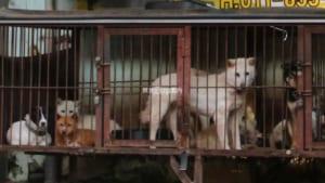 実録!韓国の犬肉市場訪問記!釜山広域市「亀浦市場」でポシンタンを食ってきた